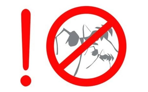 白蚁防治效果