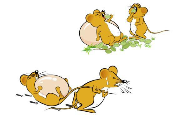 老鼠的危害,可大可小