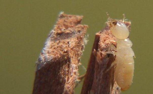 津市集中开展白蚁防治工作图片