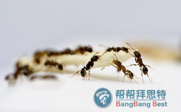 白蚁与蚂蚁的区别