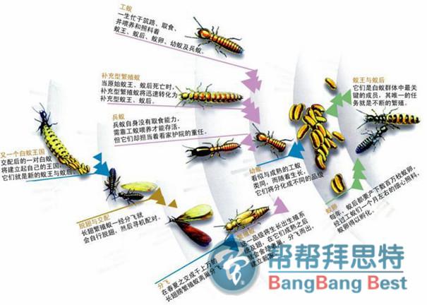 白蚁的危害习性及最佳预防措施图片