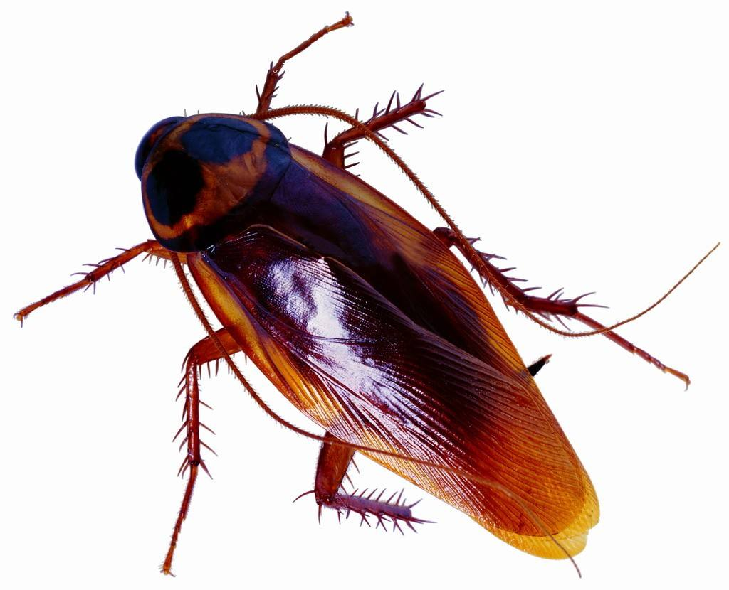 昆虫 素描 简单  步骤