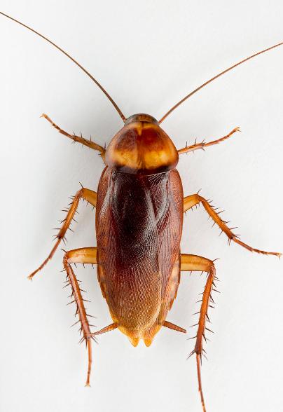 灭蟑螂的防治措施