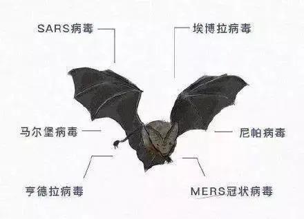"""帮帮科普:蝙蝠为什么这么""""毒"""",自己却没事?"""